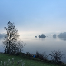 misty morning 004